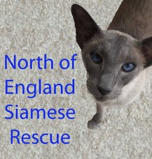 Siamese Rescue and Adoption